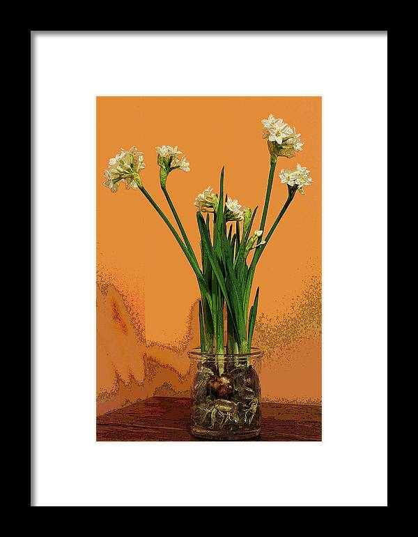 Narcissus Framed Print featuring the photograph Winter Beauty II by Suzanne Gaff