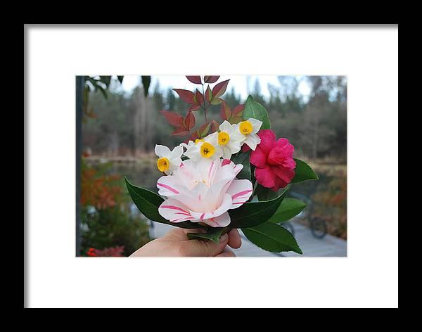 Camellia Framed Print featuring the photograph Winter Boquet by Linda Sramek