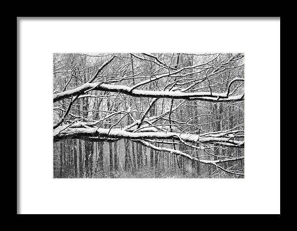 Tree Framed Print featuring the mixed media Winter Branches by Marina Kojukhova