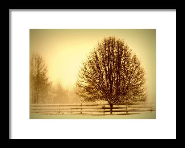 Winter Framed Print featuring the photograph Winter Calm by Tina Meador