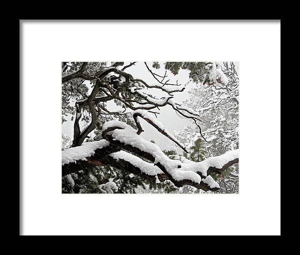 Trees Framed Print featuring the tapestry - textile Winter Comes To Colorado by Ilan Shamir