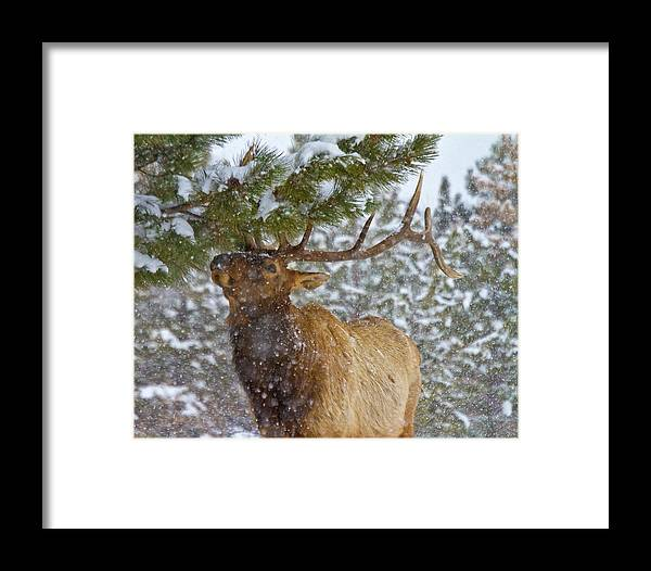 Animal Framed Print featuring the photograph Winter Edibles by Crystal Garner