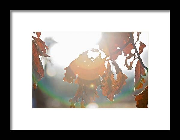 Sky Is The Limit Images Framed Print featuring the photograph Winter Flare by Becca Buecher