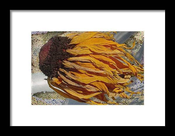 Digital Art Framed Print featuring the digital art Winter Flower by Ron Bissett