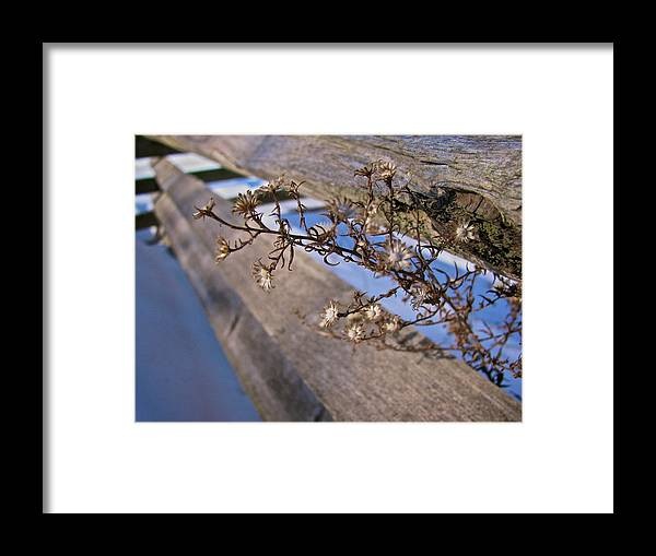 Flower Framed Print featuring the photograph Winter Flowers by Michele Stoehr