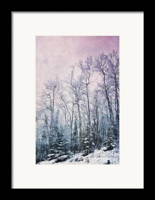 Forest Framed Print featuring the photograph Winter Forest by Priska Wettstein