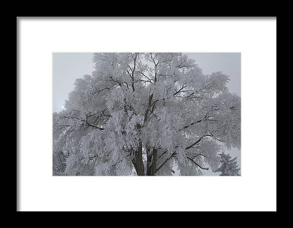 Winter Framed Print featuring the photograph Winter Frost by Byron Fair