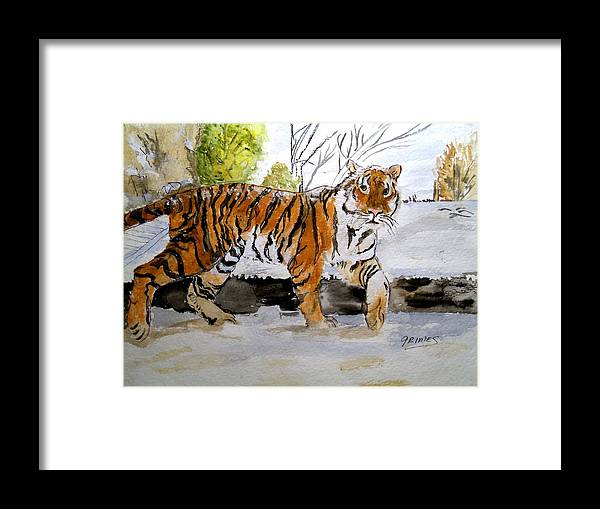 Tiger Framed Print featuring the painting Winter In The Zoo by Carol Grimes
