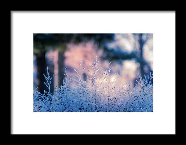 Winter Framed Print featuring the photograph Winter Morning Light by Allin Sorenson