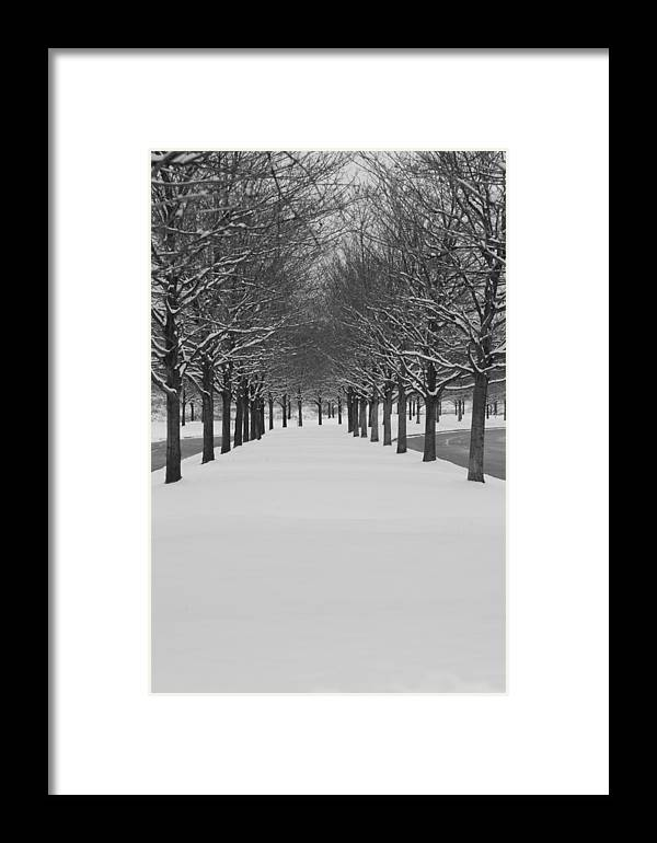 Trees Framed Print featuring the photograph Winter Rows by Lauri Novak