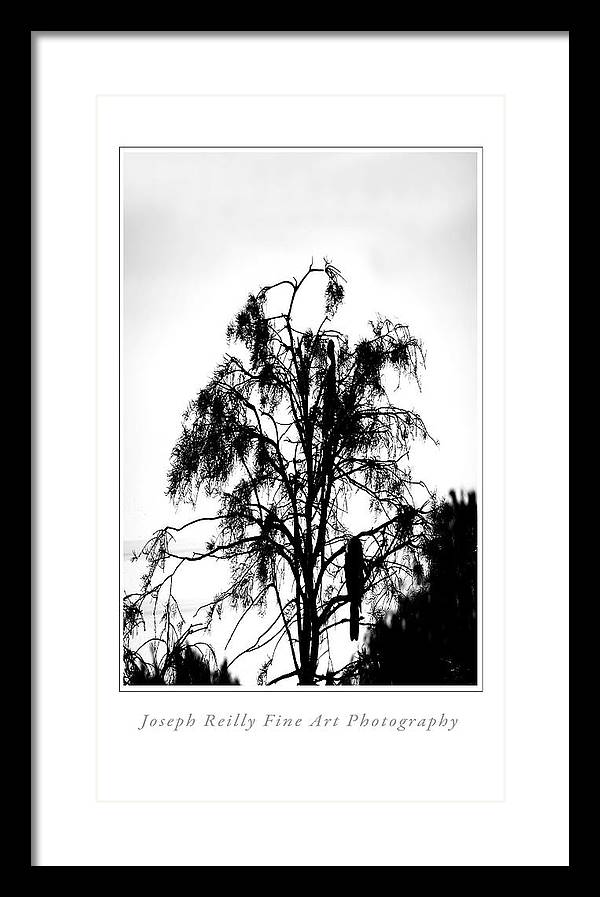 Framed Print featuring the photograph Winter Sky Wood Storks by Joseph Reilly