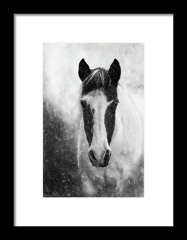 Winter Snow Storm Black White Horse Framed Print by Melissa Bittinger