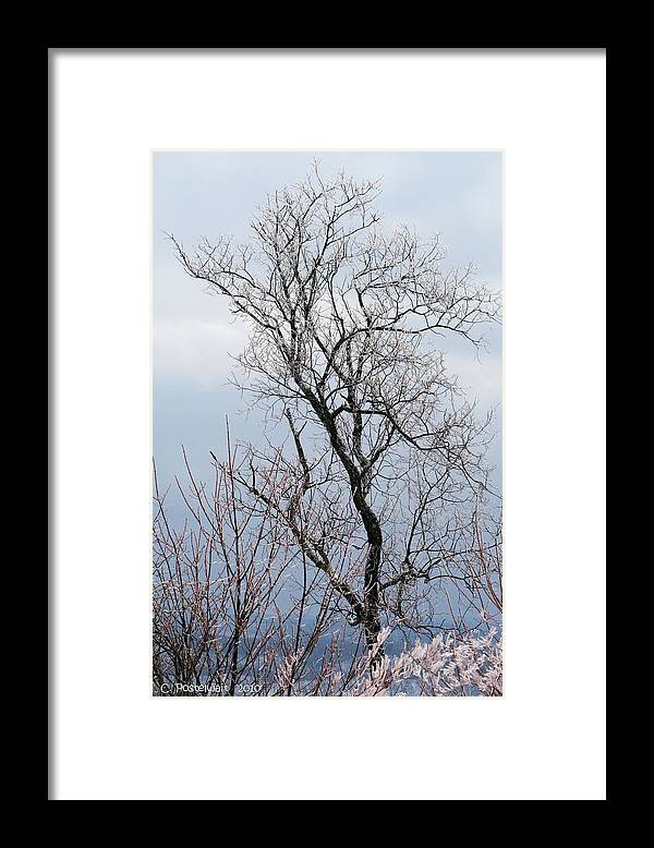 Winter Framed Print featuring the photograph Winter Splendor by Carolyn Postelwait