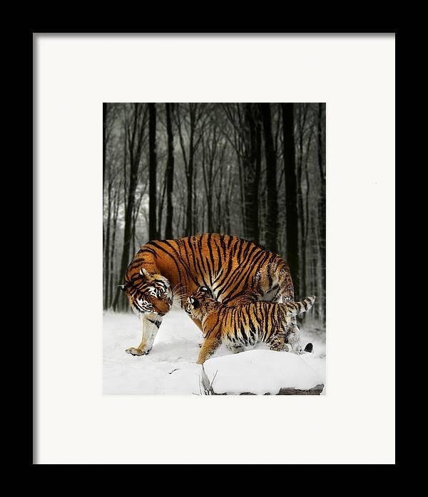 Tiger Framed Print featuring the digital art Winter Stroll by Julie L Hoddinott
