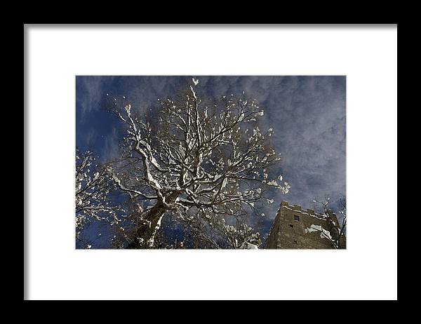 Tree Framed Print featuring the photograph Winter Tree And Castle by Andrea Gabrieli