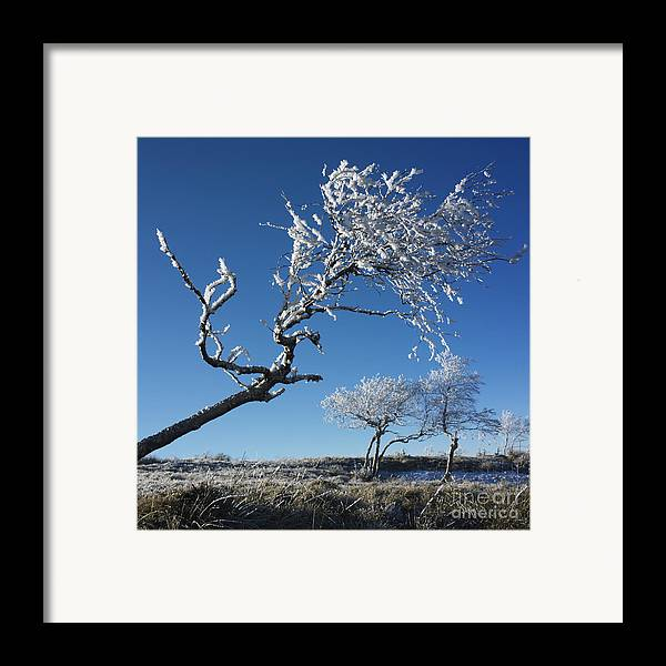 Bare Tree Framed Print featuring the photograph Winter Tree. by Bernard Jaubert