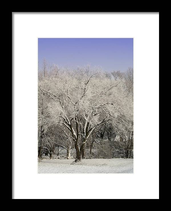 Landscape Framed Print featuring the photograph Winter Trees by Diane Merkle