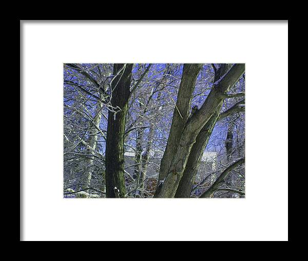 Tree Framed Print featuring the photograph Winter Trees by Misty VanPool