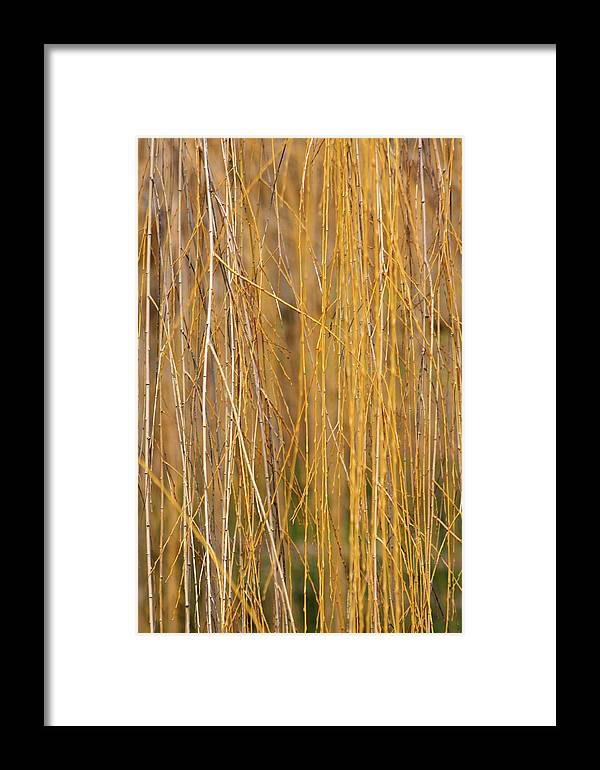 Framed Print featuring the photograph Winter Willow by Melanie Rainey