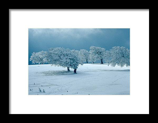 Winter Framed Print featuring the photograph Winter Wonderland by Flavia Westerwelle