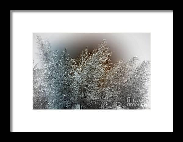 3d Framed Print featuring the digital art Winterlight by Issabild -