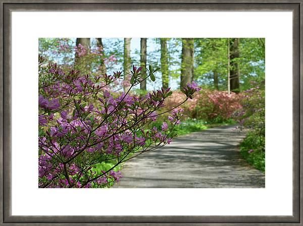 Winterthur Gardens #00548 by Raymond Magnani