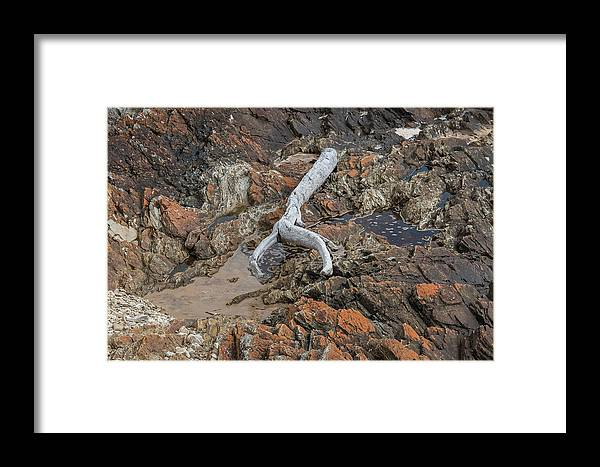 Tasmania Australia Framed Print featuring the photograph Wish Bone - Driftwood by Mark Christian