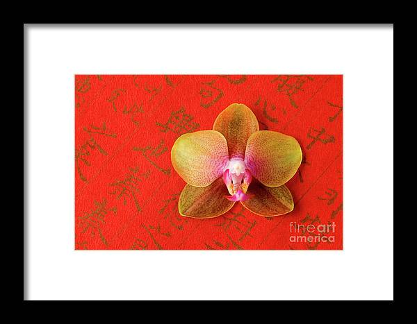 Orchid Framed Print featuring the photograph Wishes Come True by Julia Hiebaum