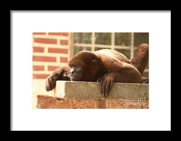 Animals Framed Print featuring the photograph Wishful Thinking by Alisha Robertson