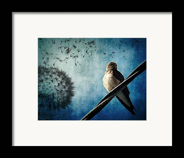 Swallow Framed Print featuring the photograph Wishing Swallow by Nancy Coelho