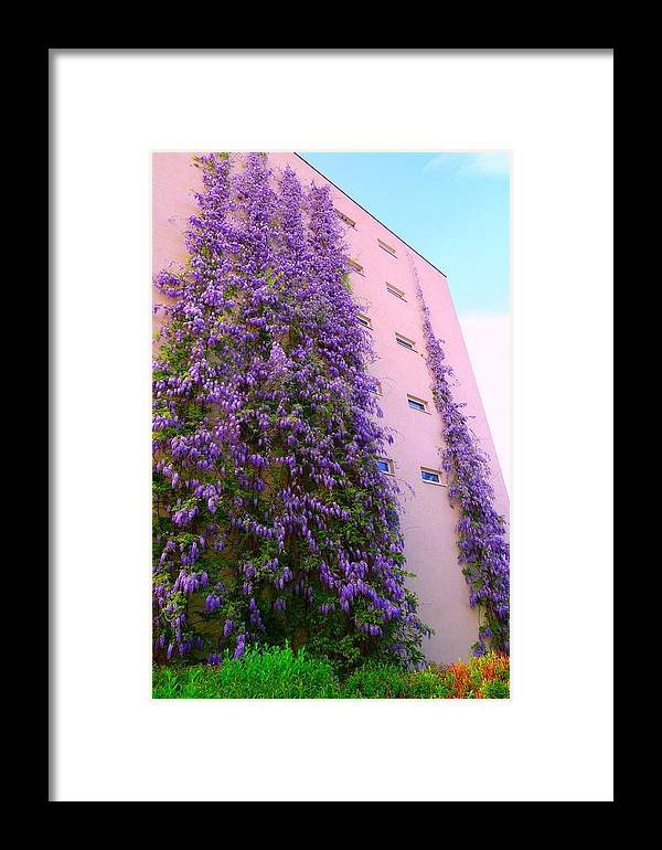 Regina Donetskaya Framed Print featuring the photograph Wisteria Attacks by Regina Donetskaya