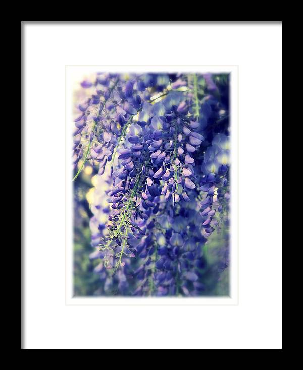 Wisteria Framed Print featuring the photograph Wisteria Whimsy by Jessica Jenney
