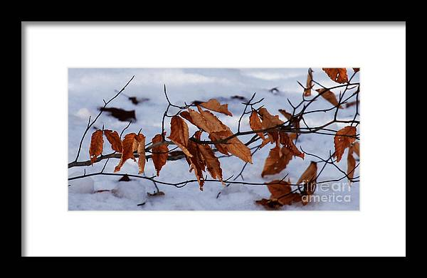 Autumn Framed Print featuring the photograph With Autumn's Passing by Linda Shafer
