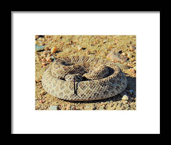 Snake Framed Print featuring the photograph With Forked Tongue by Carl Miller