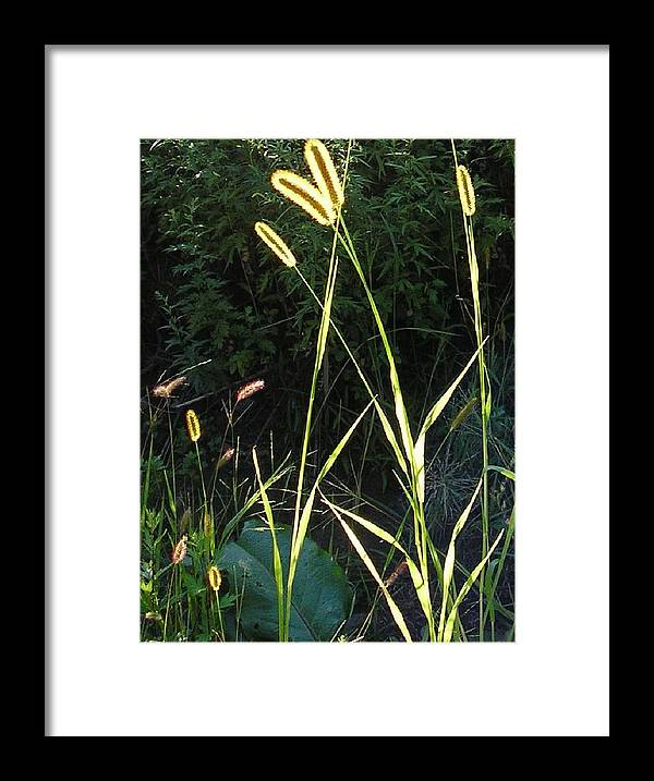 Grass Framed Print featuring the photograph With Love From Zena by Christina Gardner
