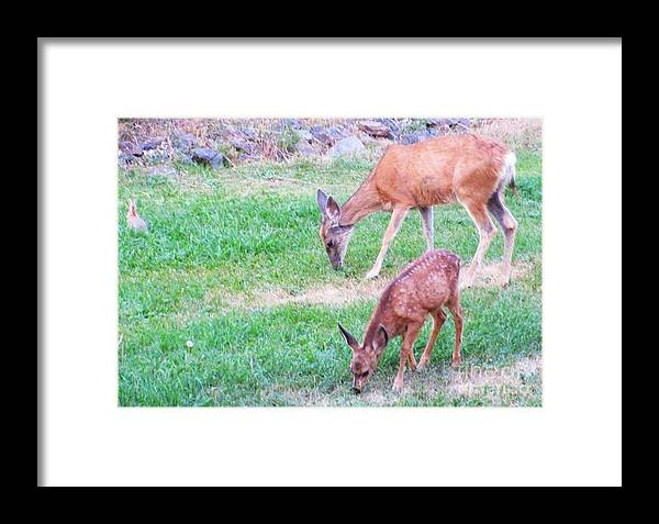 Deer Framed Print featuring the photograph With Mother by Jeff Birr