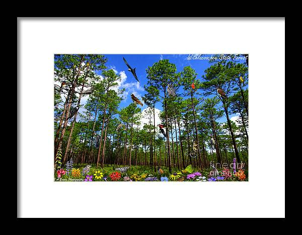 Withlacoochee State Forest Framed Print featuring the photograph Withlacoochee State Forest Nature Collage by Barbara Bowen