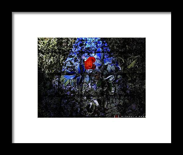 Rose Framed Print featuring the photograph Without A Name by Jonathan Ellis Keys