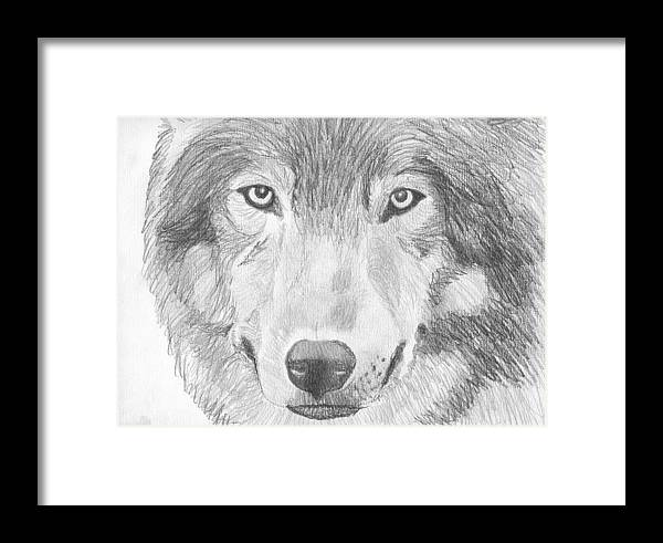 Pigatopia Framed Print featuring the drawing Wolf Wildlife Portrait Original Sketch By Pigatopia by Shannon Ivins