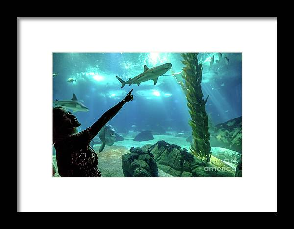 Underwater Framed Print featuring the photograph Woman Shark Enjoyng by Benny Marty