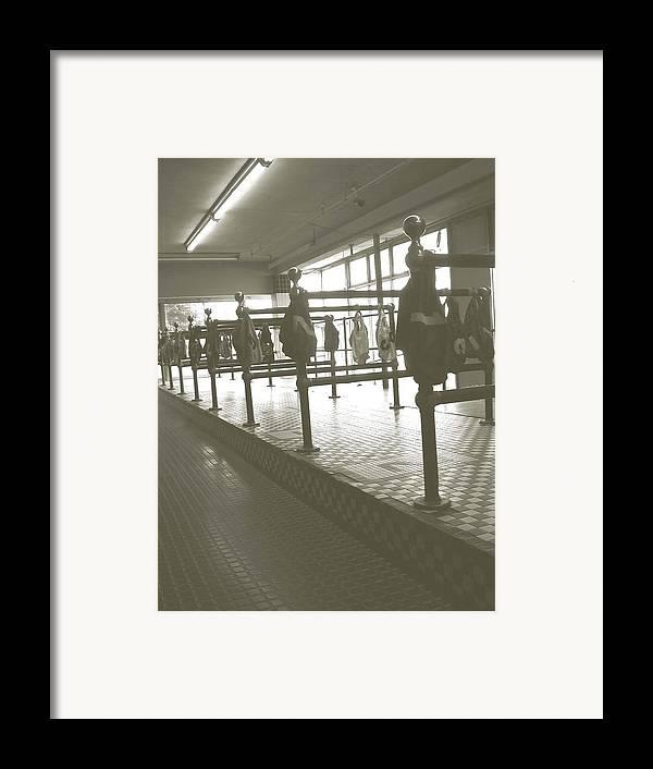 Wonderland Dog Track Framed Print featuring the photograph Wonderland Dog Track by Heather Weikel