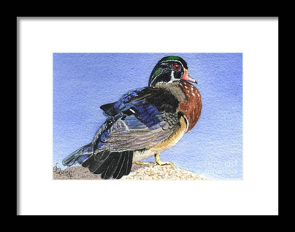 Duck Framed Print featuring the painting Wood Duck by Lynn Quinn