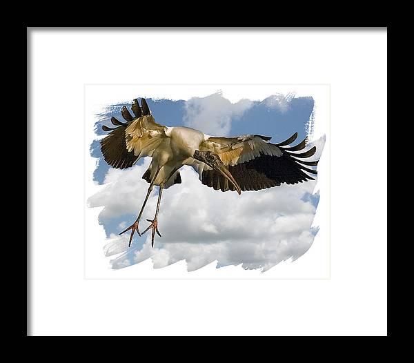 Wood Stork Framed Print featuring the photograph Wood Stork by Larry Linton