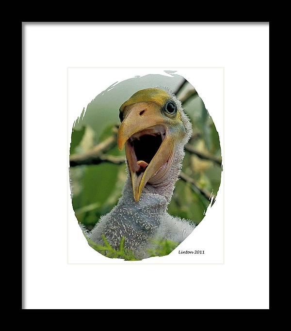 Wood Stork Framed Print featuring the digital art Wood Stork Nestling by Larry Linton