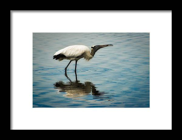 Stork Framed Print featuring the photograph Wood Stork by Rich Leighton