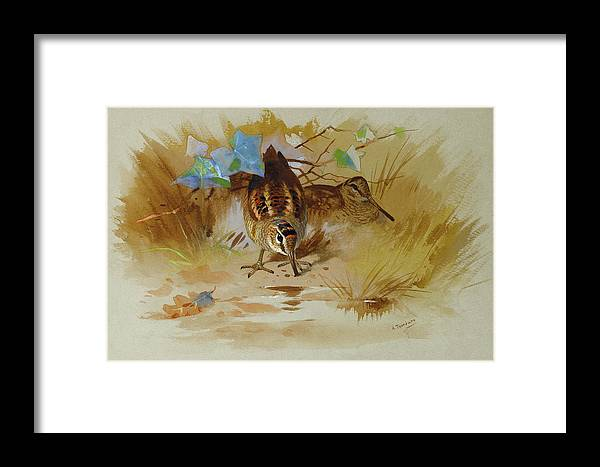 Woodcock Framed Print featuring the mixed media Woodcock In A Sandy Hollow By Thorburn by Archibald Thorburn