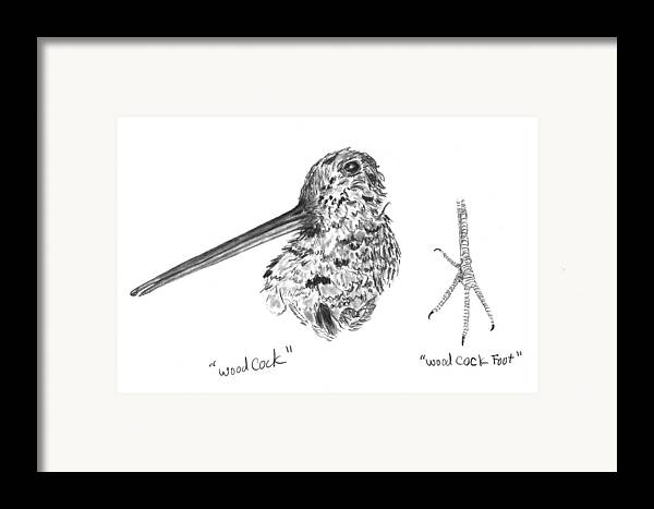 Iowa Framed Print featuring the drawing Woodcock With Foot by Kevin Callahan