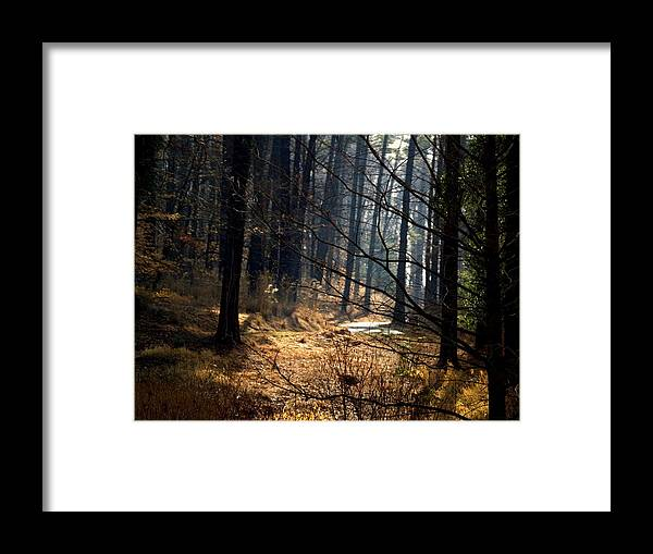 Blue Ridge Mountains Framed Print featuring the photograph Woods by Aline Kala