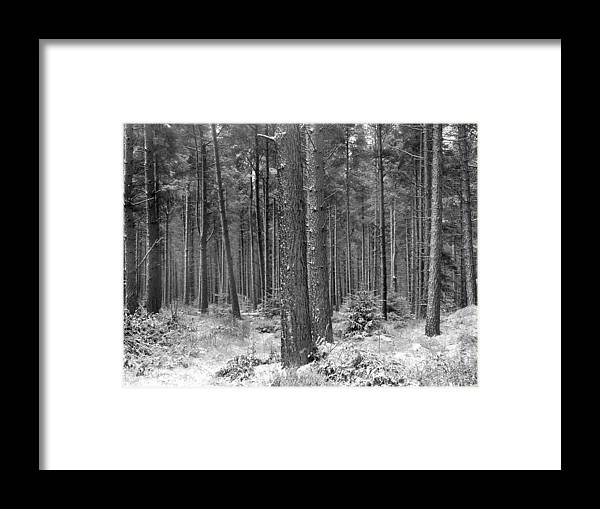 Framed Print featuring the photograph Woods In Winter, Slaley by Iain Duncan