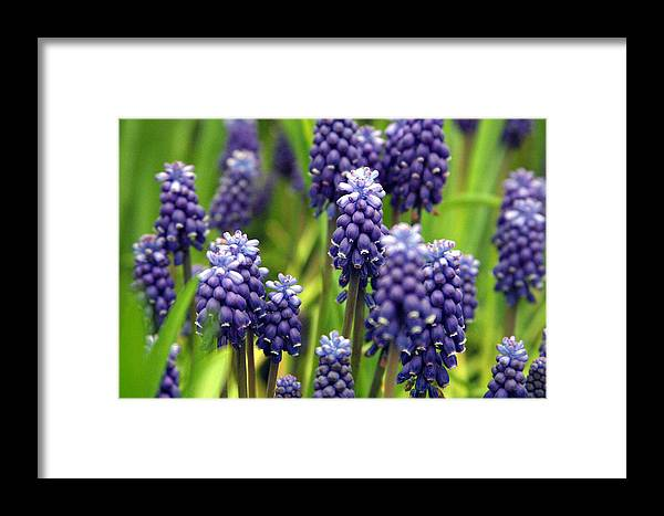 Photographer Framed Print featuring the photograph Woods by Jez C Self